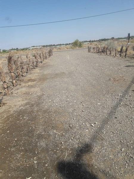 کاشت درخت در قاسم آباد