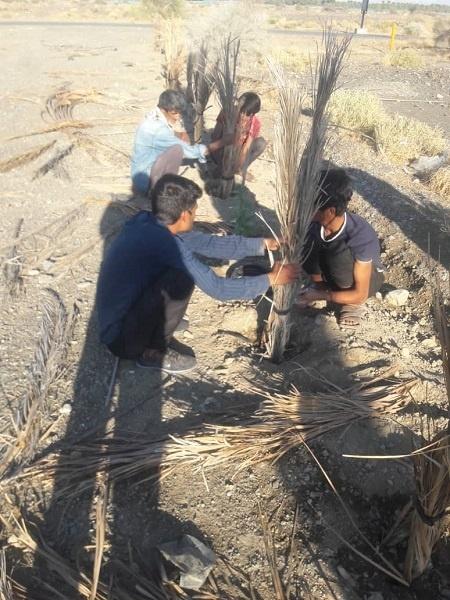 درختکاری در جیرفت